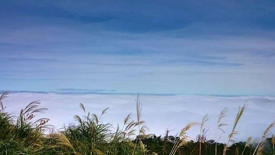 太平山毛櫸步道2.4公里至2.6公里之間的雲海。圖/羅東林管處提供