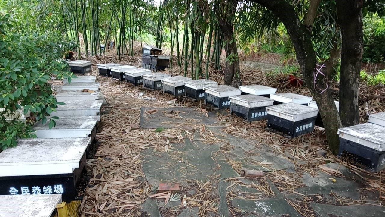 全台各地都有蜜蜂減少現象,不只野生蜜減量,人工養殖的蜂蜜也愈來愈珍貴。圖/高市農...