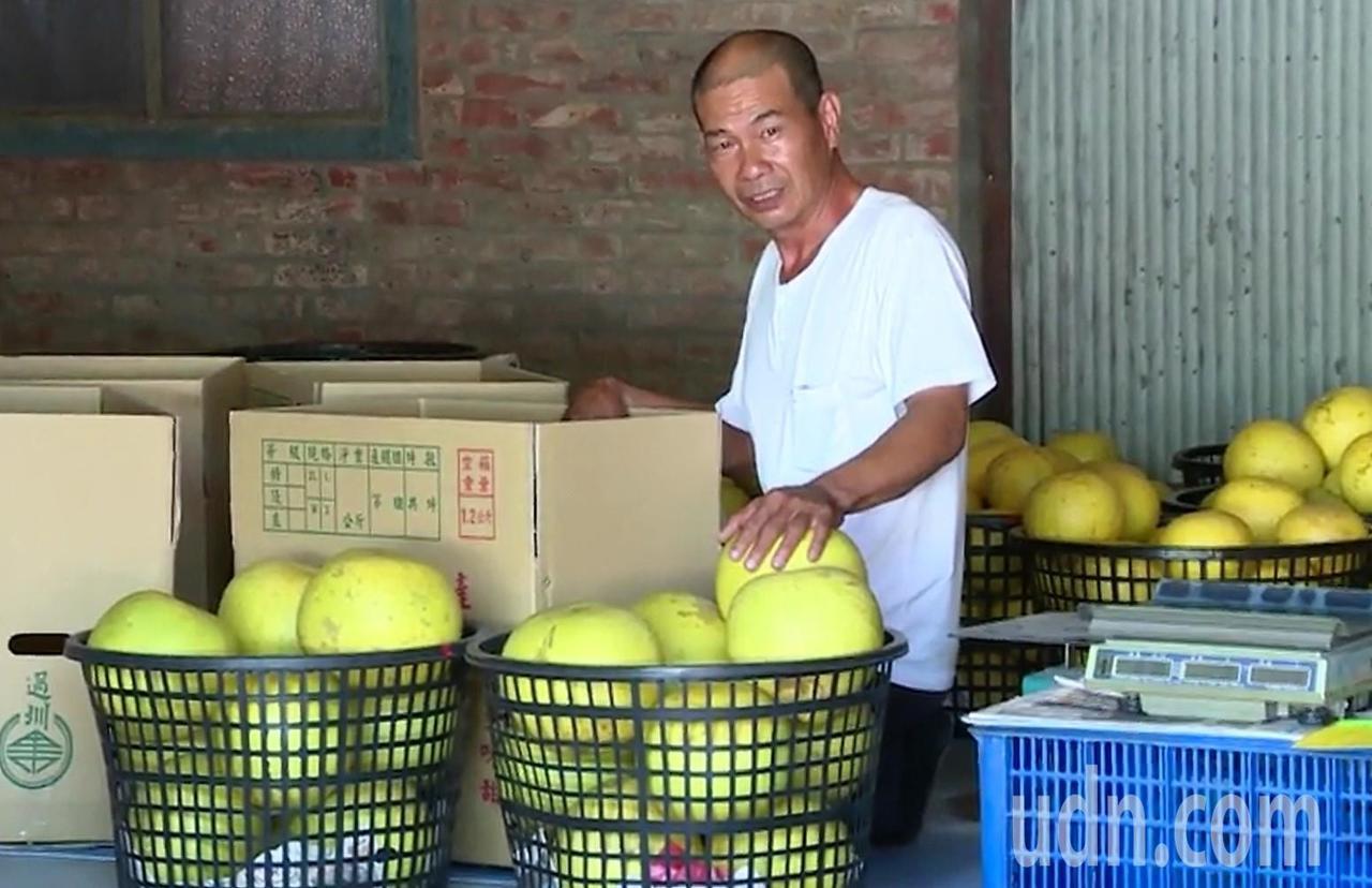 彰化縣二水鄉的白柚進入產季,今年因氣候因素產量略減,但價格卻親民。記者凌筠婷/攝...