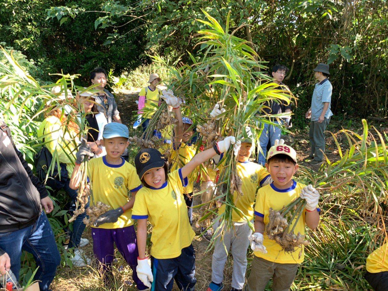 南大附小彩虹斑馬志工隊到南化探索薑田,了解薑的知識。圖/南大附小提供