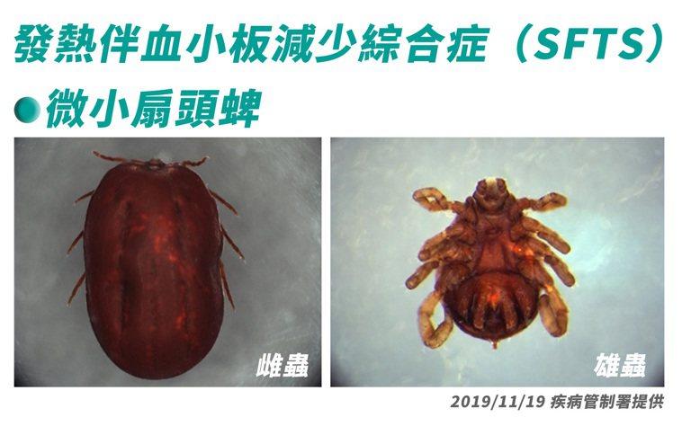 SFTS病毒以蜱蟲為主要傳播媒介,人類或動物若被帶有病毒的蜱蟲叮咬便會感染。本圖...