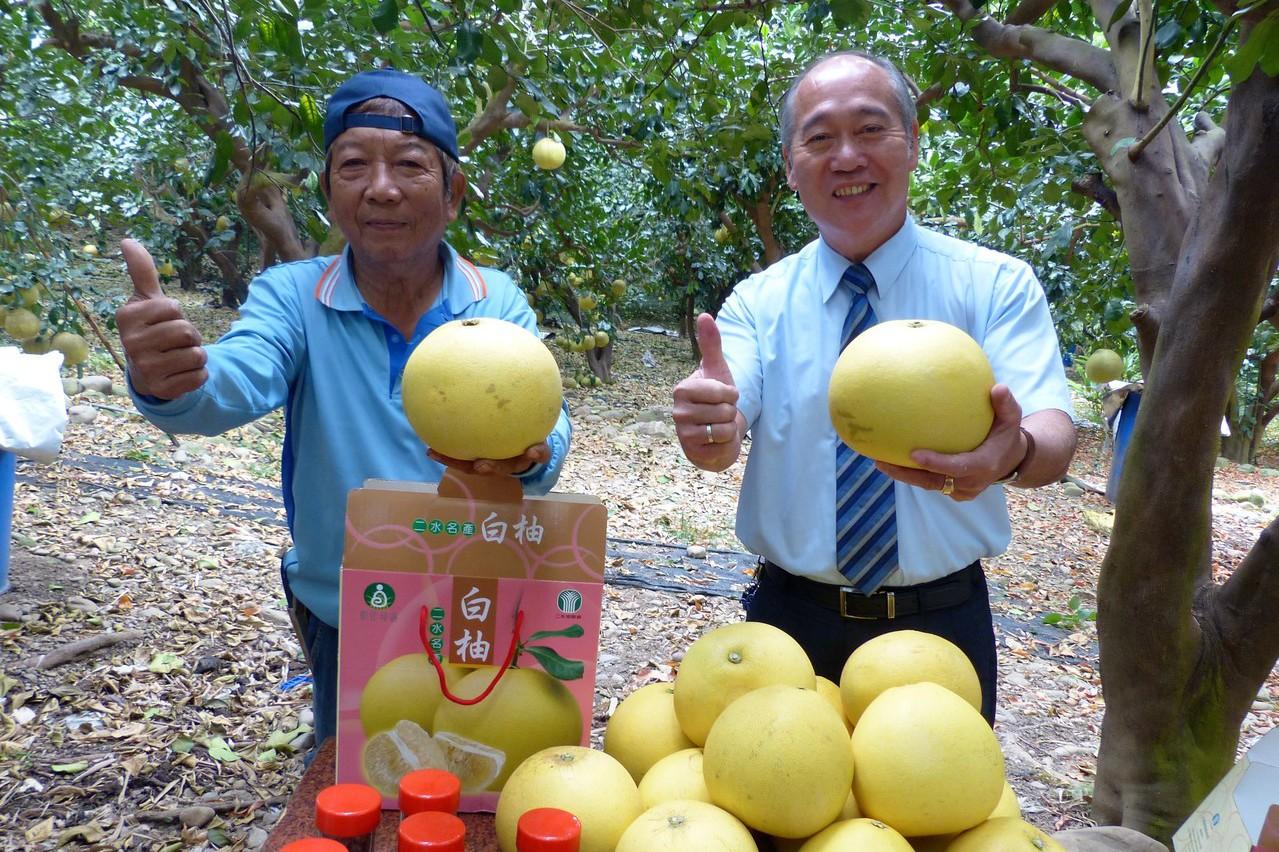 白柚種到外銷日本 二水農民陳永棠成白柚達人