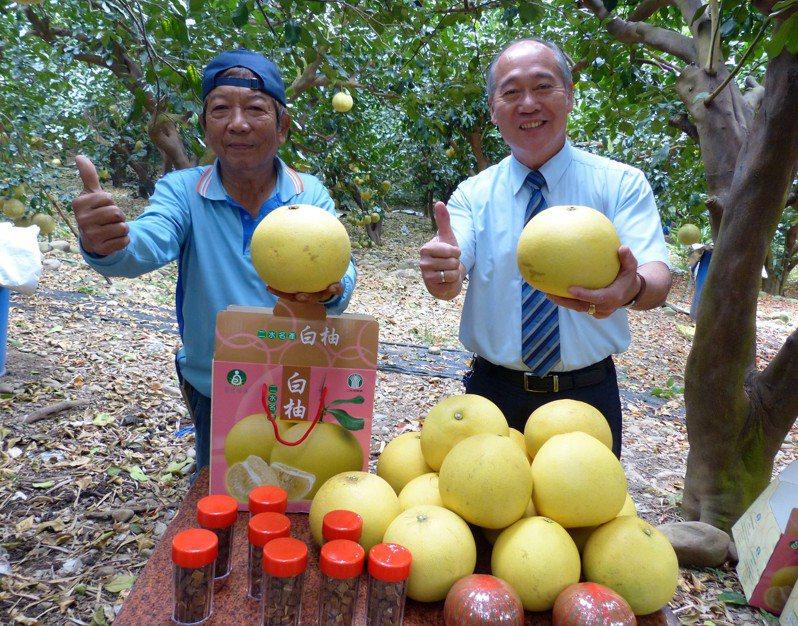 二水鄉農民陳永棠(左)種植高品質白柚,每年都外銷日本。記者凌筠婷/攝影