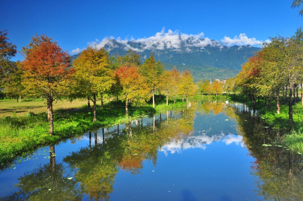 宛如仙境的落羽松秘境,成為花蓮最新拍照景點。圖/理想大地提供