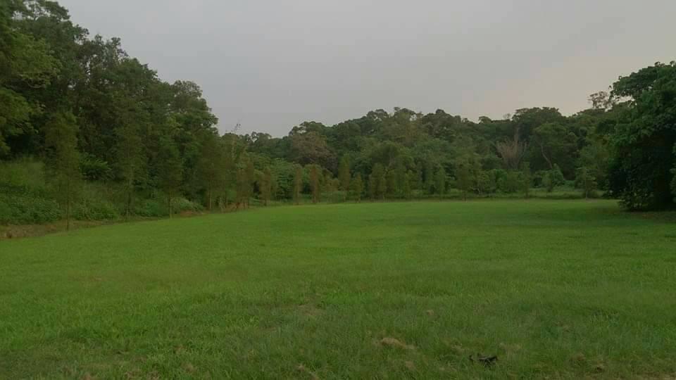 民雄森林公園3年前還有很平整的大草原,有許多民眾會來運動。圖/陳姓民眾提供