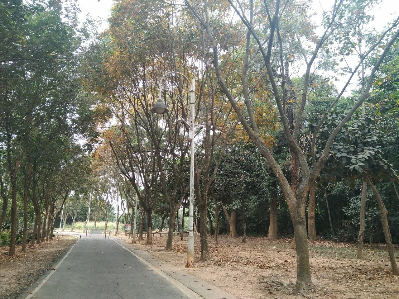 民雄森林公園內有片很美的落羽松森林,曾經是民雄的秘境,但後來因缺乏整治,較少民眾...