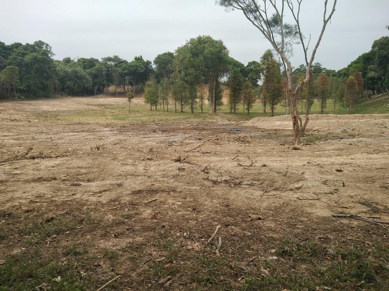 民雄鄉公所目前正協助民雄森林公園做草地整修,未來會再種更多落羽松及恢復草原的綠色...