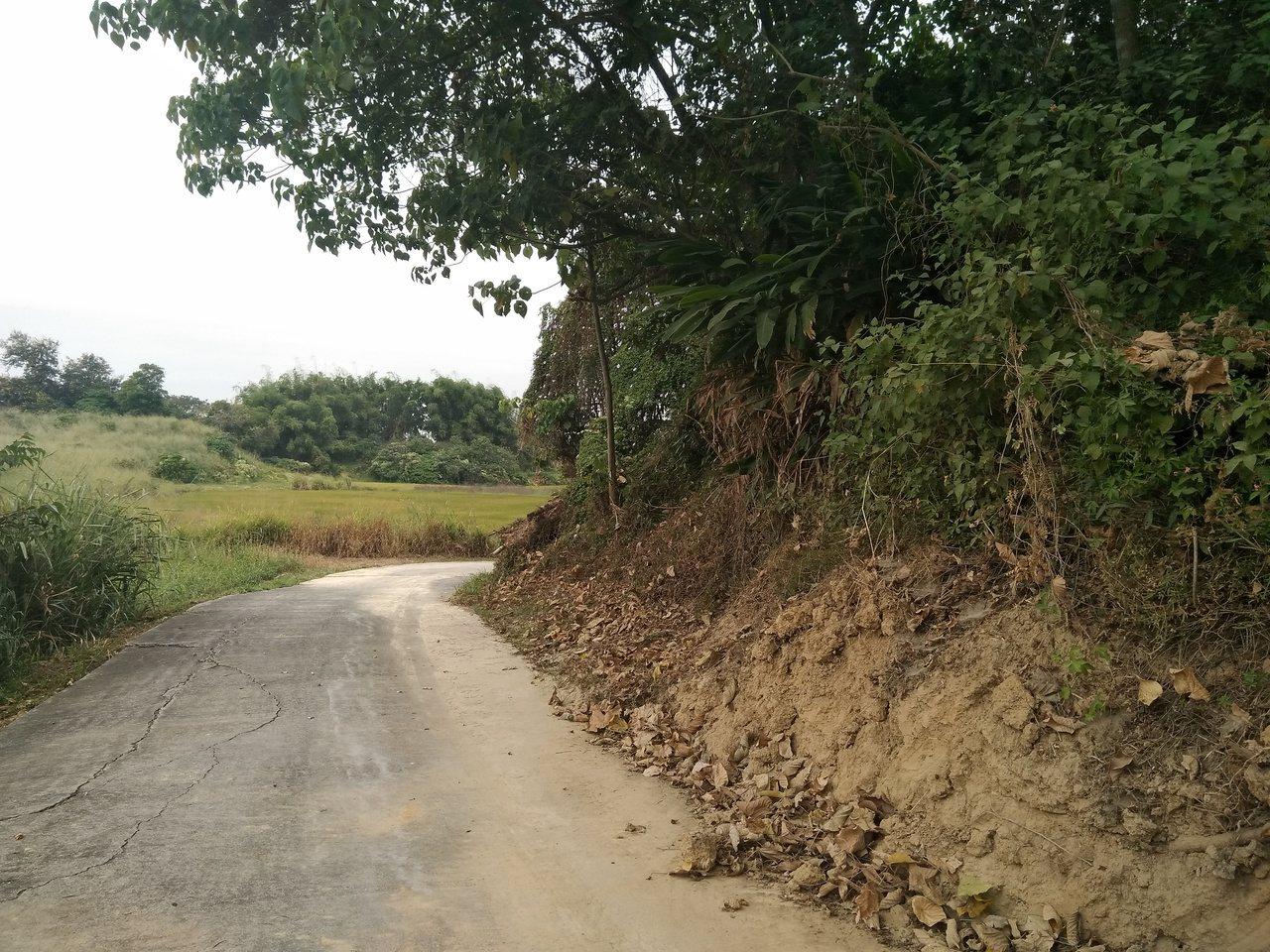 嘉義縣民雄森林公園目前因缺乏經費,雖然已經稍微整治過,但路面及攀爬在樹上的小花蔓...