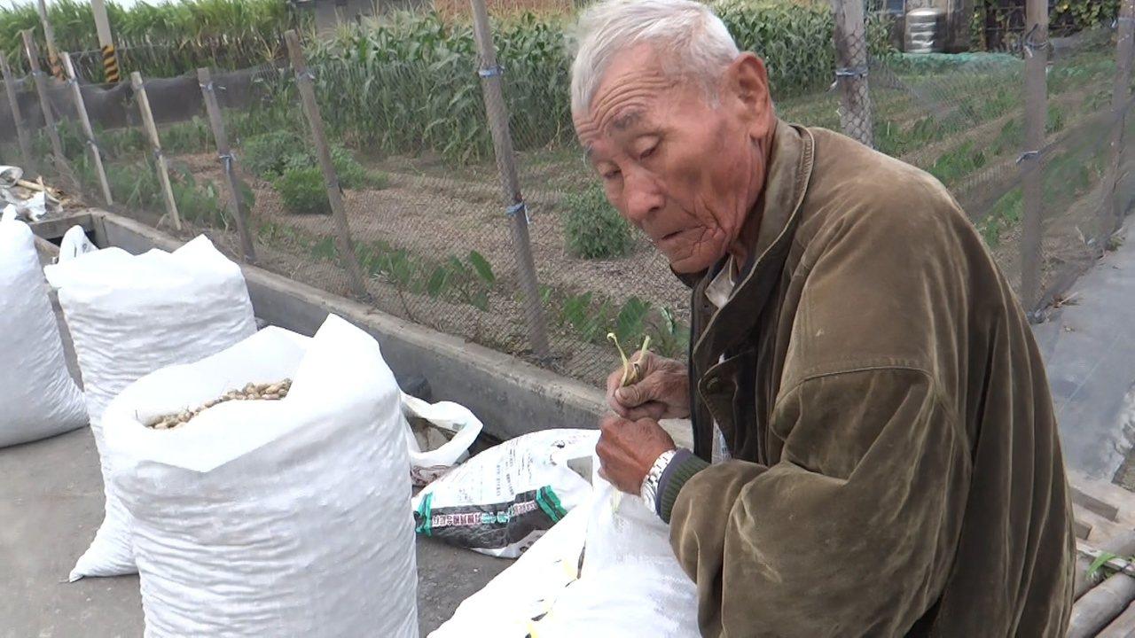 徐水源快90歲的親戚都來幫忙縫布袋,準備把辛苦種的花生以每台斤36元低價賣出。記...