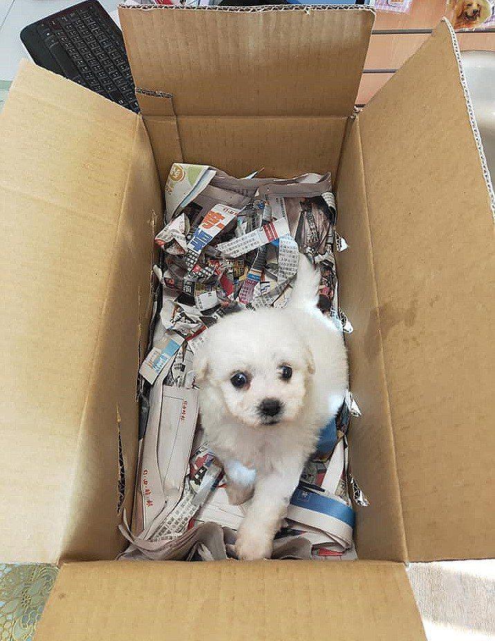 多次將售出的犬隻以裝水果的貨運用紙箱裝載,再鋪上碎報紙後,直接寄送給遠在台北的買...