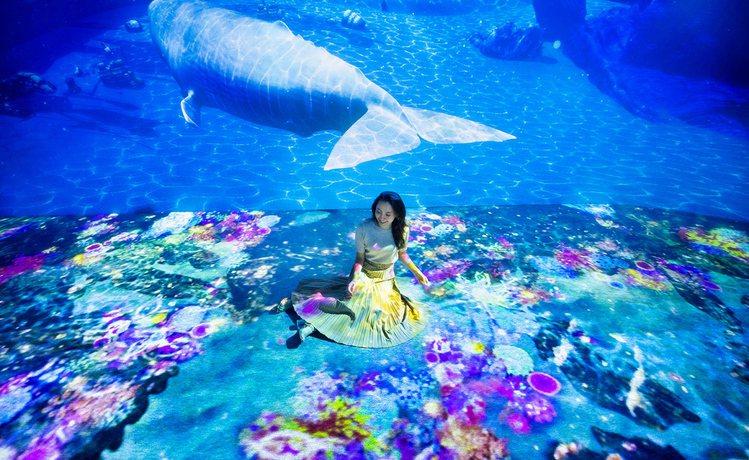 「PARADISE」讓參觀者恣意悠遊海底世界,享受與鯨豚共舞時光。圖/取自OCE...