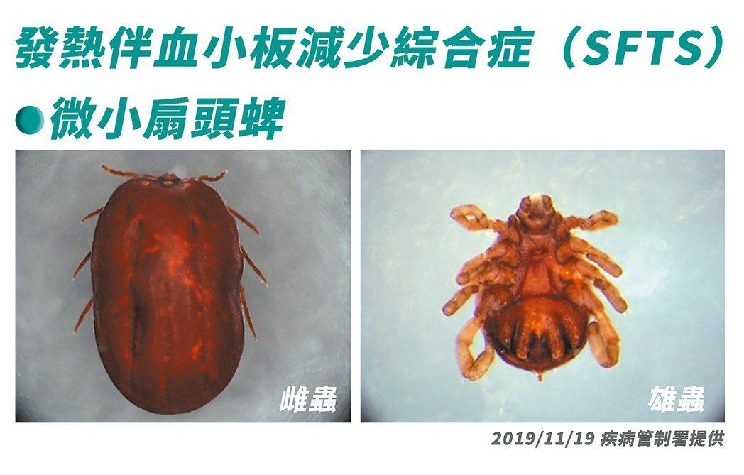 至野外活動,應著長袖衣物,以免遭受蜱蟲叮咬。圖為微小扇頭蜱。 圖/疾管署提供