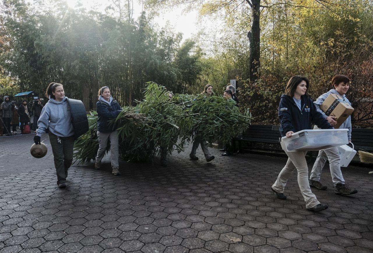 國家動物園人員19日把為貝貝準備的包括66磅竹子在內的「美食」,搬上專機。(美聯...