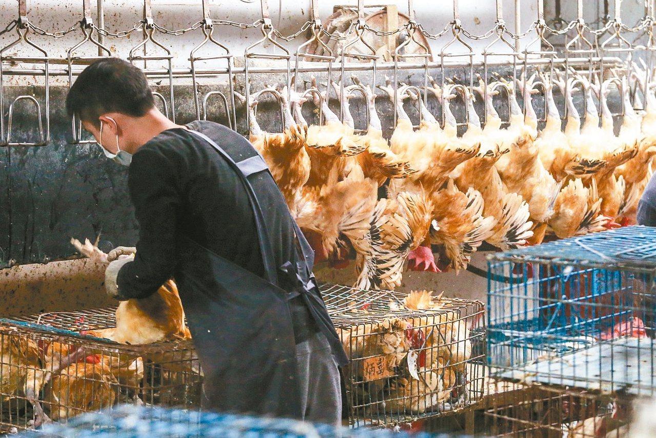 圖為台北市家禽批發市場,員工進行屠宰販售作業。 圖/聯合報系資料照片