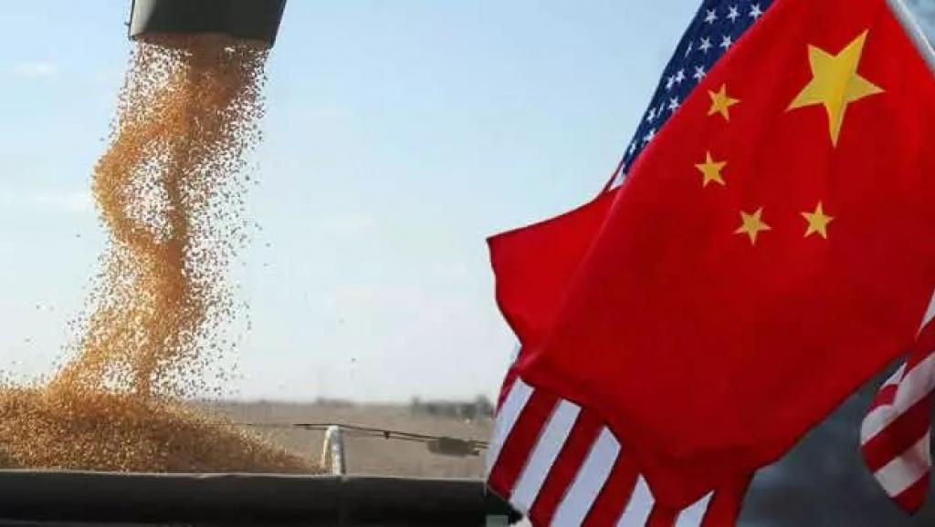 美中貿易戰聚焦美國大豆。 網路照片