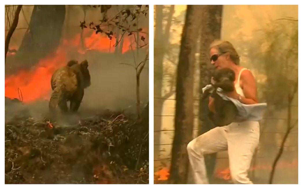 澳洲新南威爾斯野火重創當地生態,當地一名女子19日被拍到,在一場森林大火中冒險拯...
