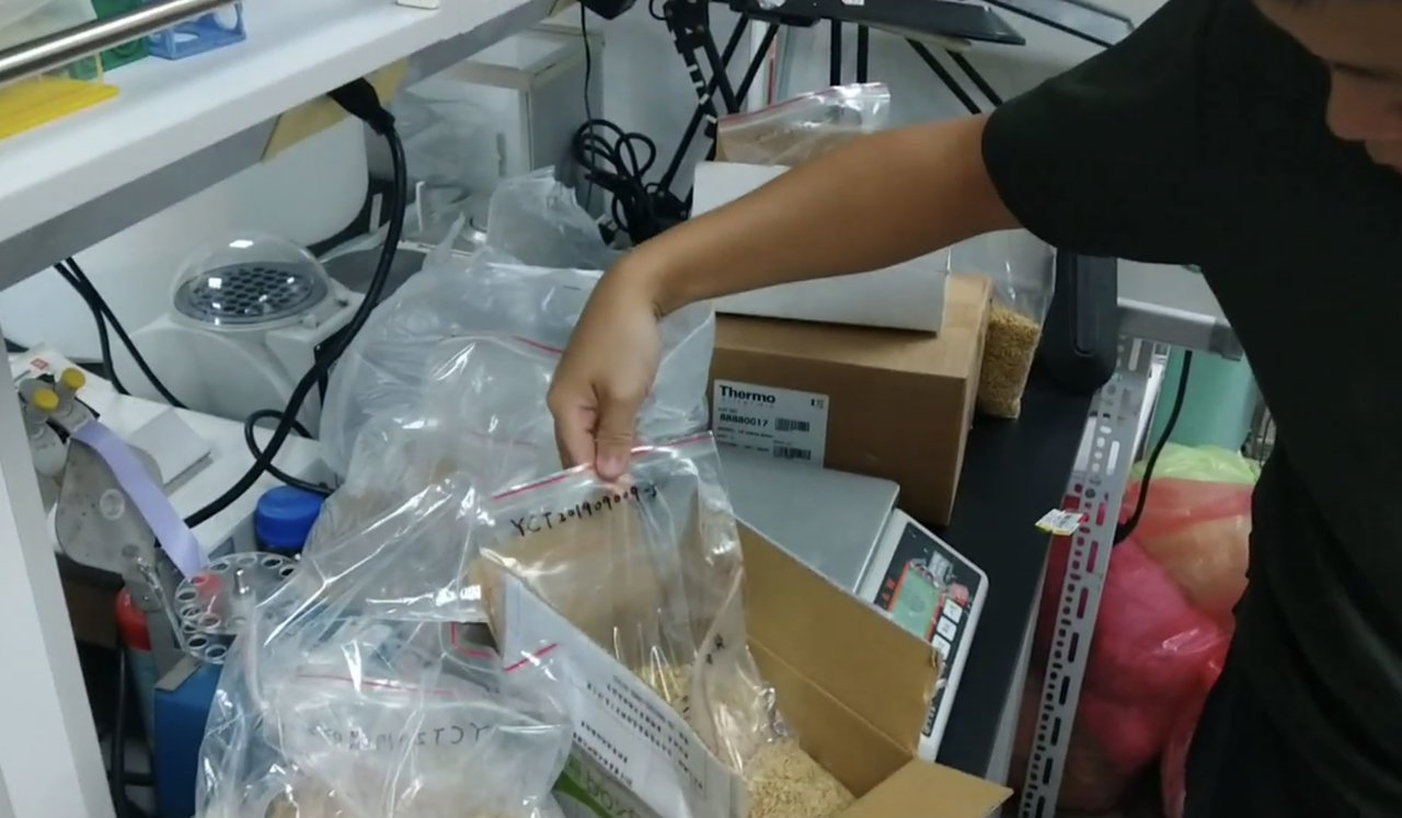 中華食品雙盲檢驗暨認證學會等單位舉辦第一屆的自然農法優質稻米競賽,將參賽稻穀送公...