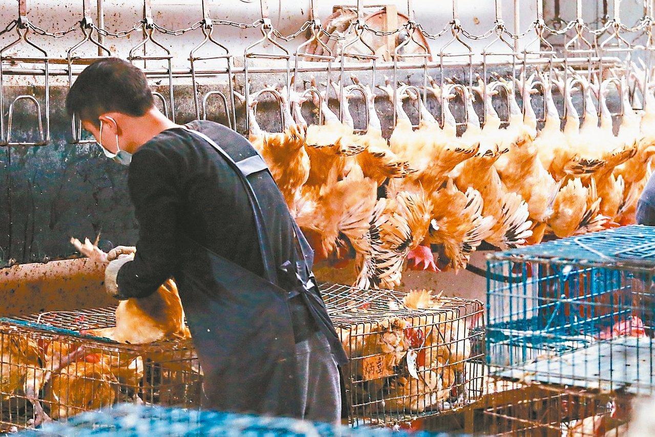 台北市長柯文哲提出產地屠宰後冷鏈運送;市場處表示,預計12月與新北開會討論雙北家...