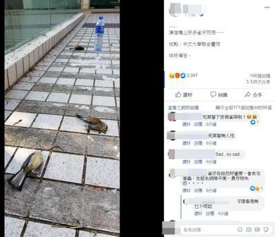 催淚彈遺害,動物也遭殃,路面多處可見鳥屍。圖/取自「香港動物報」臉書