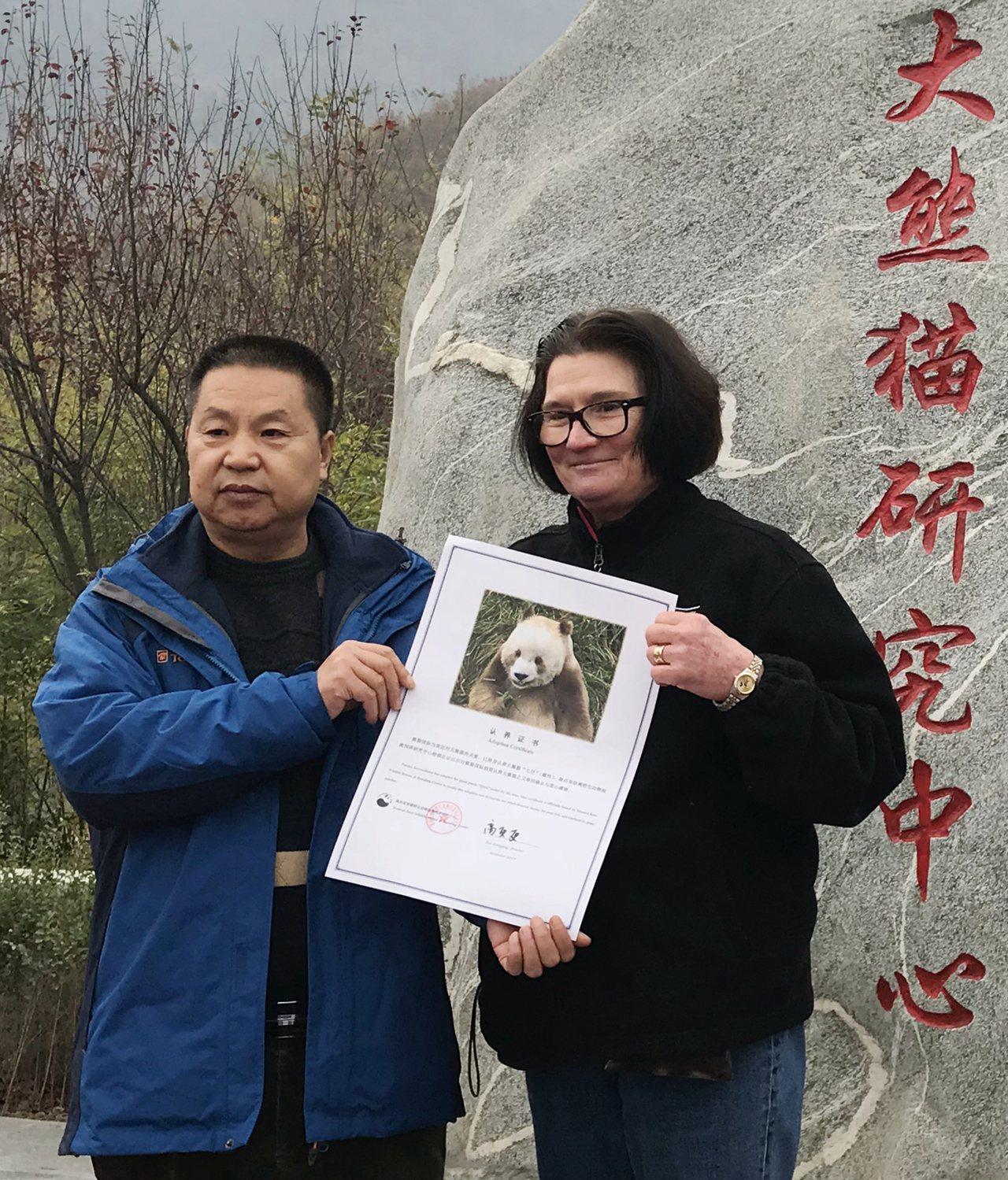 秦嶺圈養棕色大熊貓被終身認養 新華社