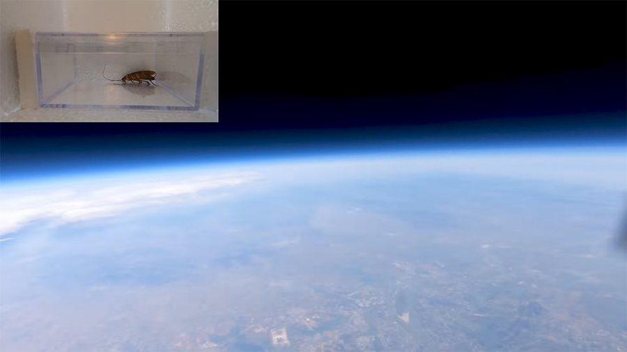 大陸一名網紅試驗將蟑螂送上太空,看看能否倖存。 圖/翻攝自Youtube