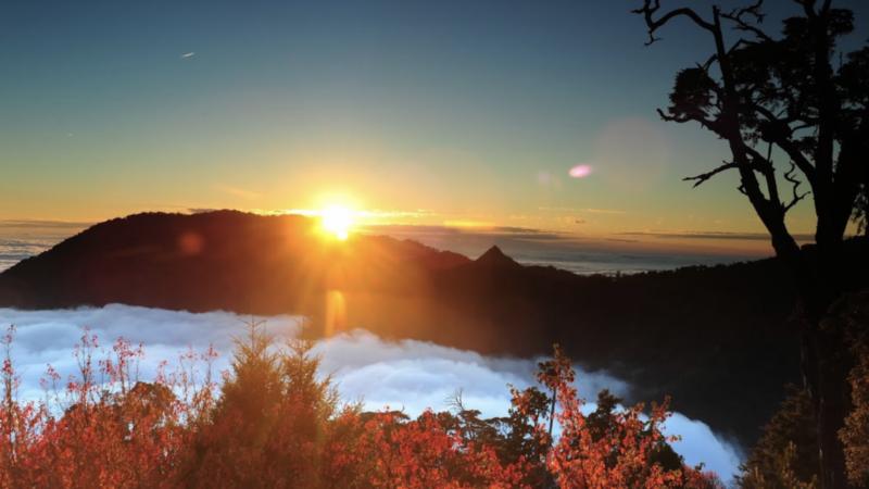 夕陽掛在雲海上,又有楓紅相映,不用登高山在大雪山林道旁就可欣賞。 圖/東勢林管處...