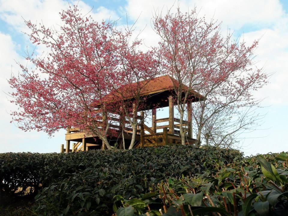 春天時的雲海加上山區山櫻花、李花陸續綻放,更能襯托出雲海山景的秀麗與壯觀。 圖/...