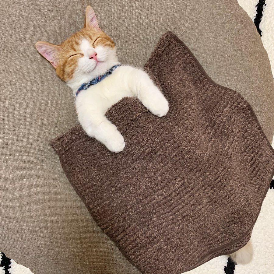 小貓茶太蓋著被子睡覺的甜蜜笑容,讓一眾網友神魂顛倒。圖/Nekonokimoch...