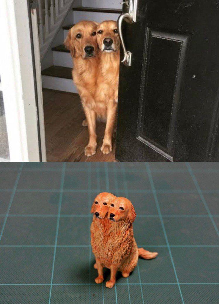 「雙頭黃金獵犬」可怕卻充滿萌感。圖/取自めーちっさい@Twitter