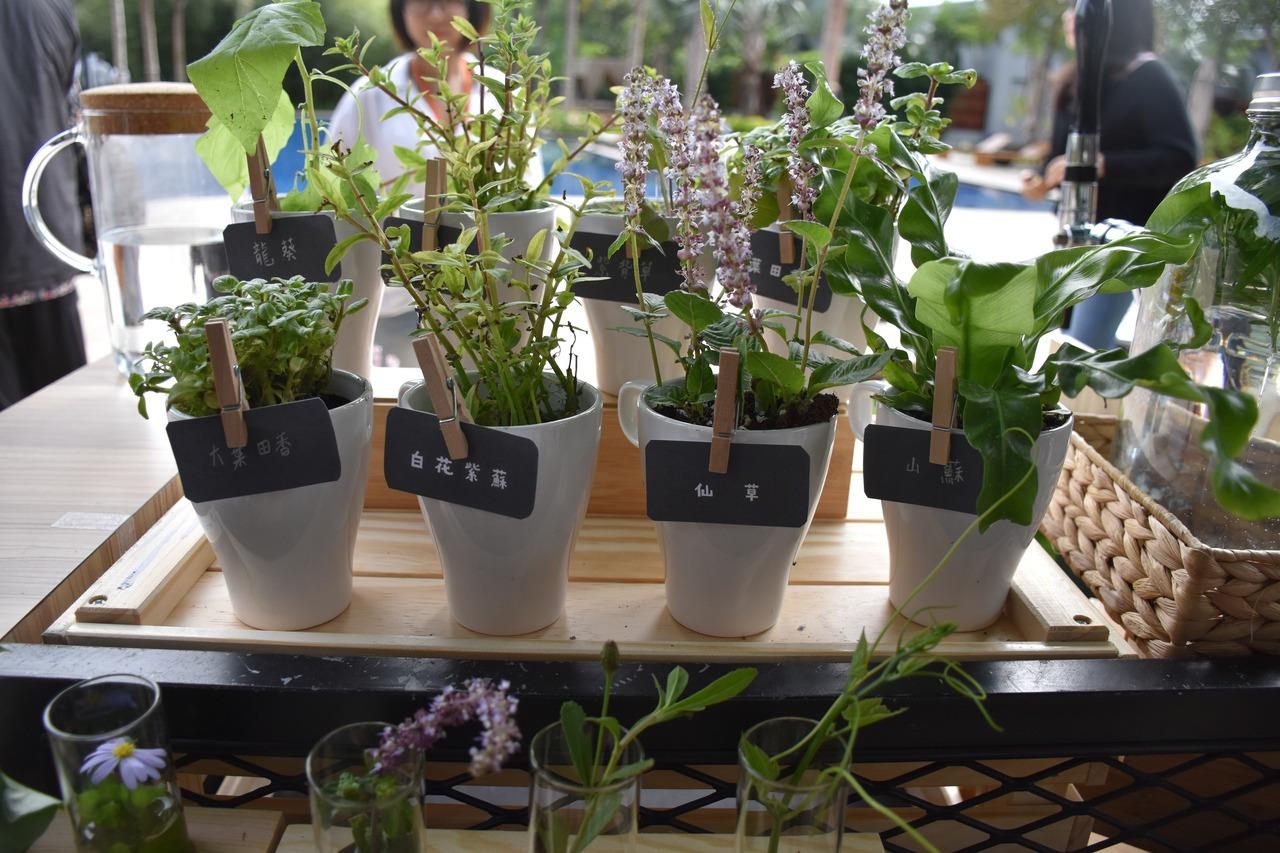恢復多樣性生態 花蓮農改場復育台灣原生植物