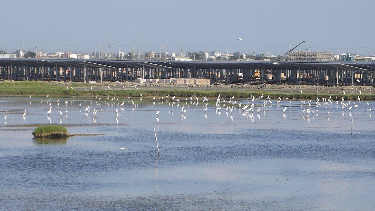 嘉義布袋的義竹電廠,是生態與發電共生共榮的示範案。現已是黑面琵鷺、燕鷗的家。圖/...