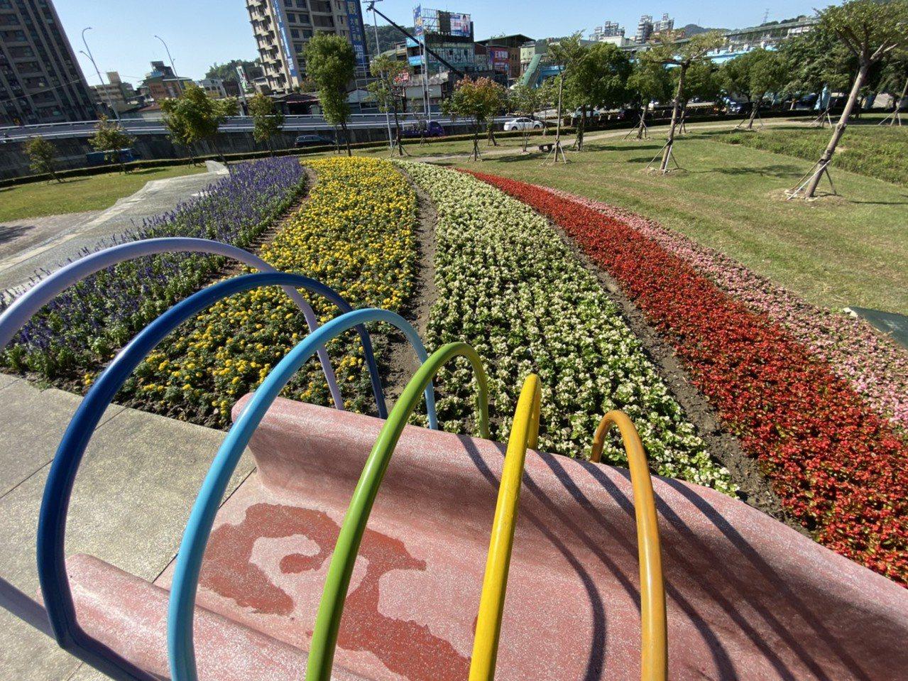 五股區體健公園內的大面積漸層花海相當浪漫。圖/新北市景觀處提供