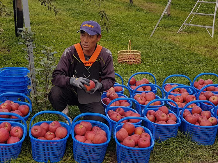 小山內勝是第一位獲青森縣認證的「特別栽培生產者(低農自然栽培法)」,即使因難度高...