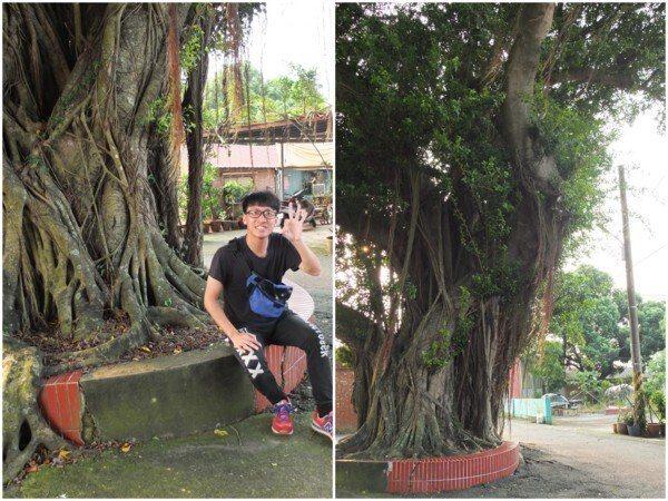 魚寮靈殿宮前的老樹下也是《俗女養成記》拍攝場景之一。