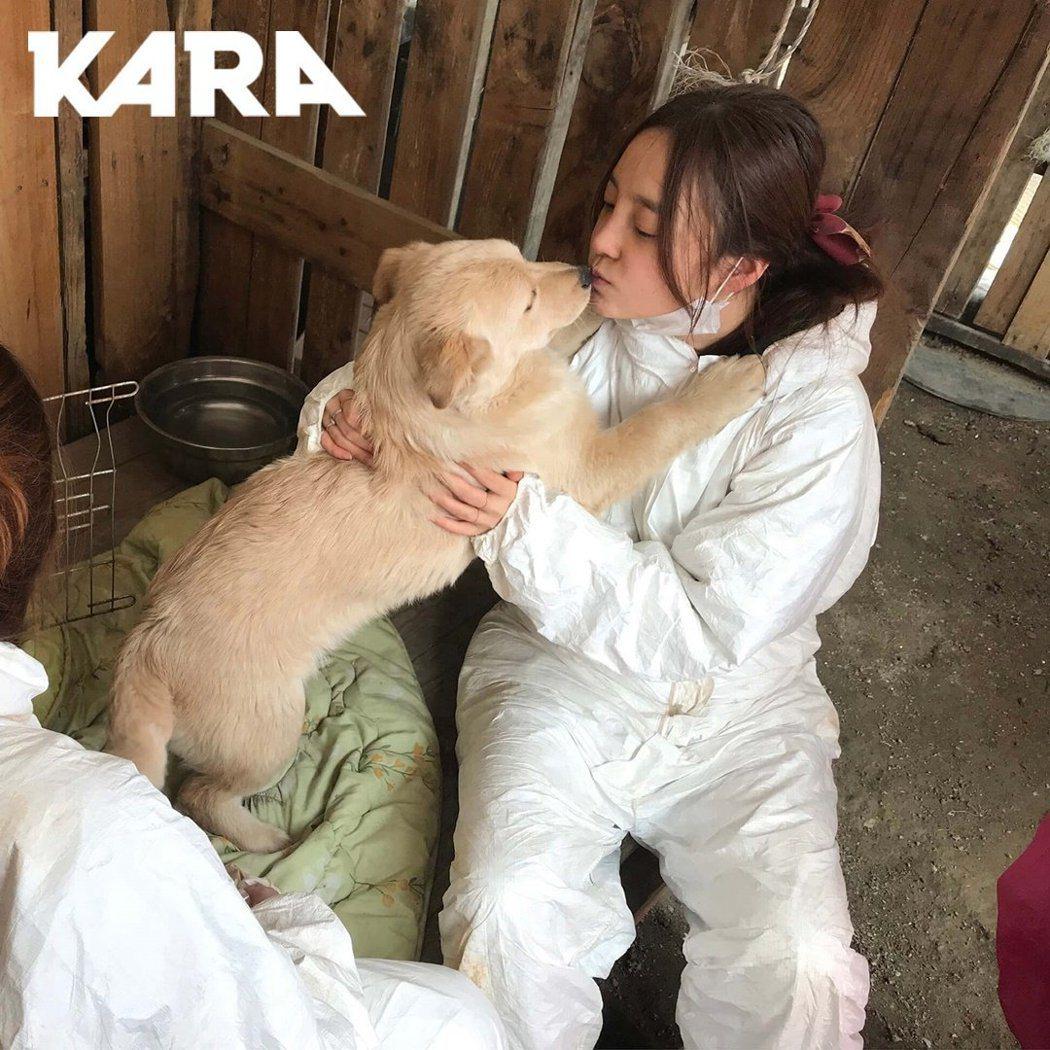 具荷拉當初照顧的狗狗已經找到新家。圖/摘自推特