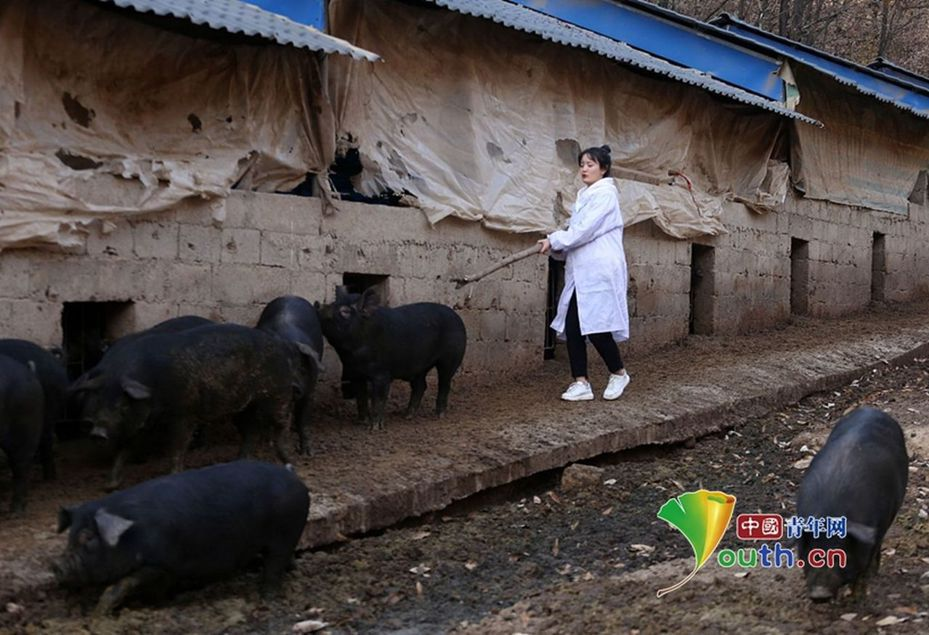 父親為了催她早日結婚許下承諾:「只要女兒結婚,至少陪嫁300頭豬」。 (取材自中國青年網)