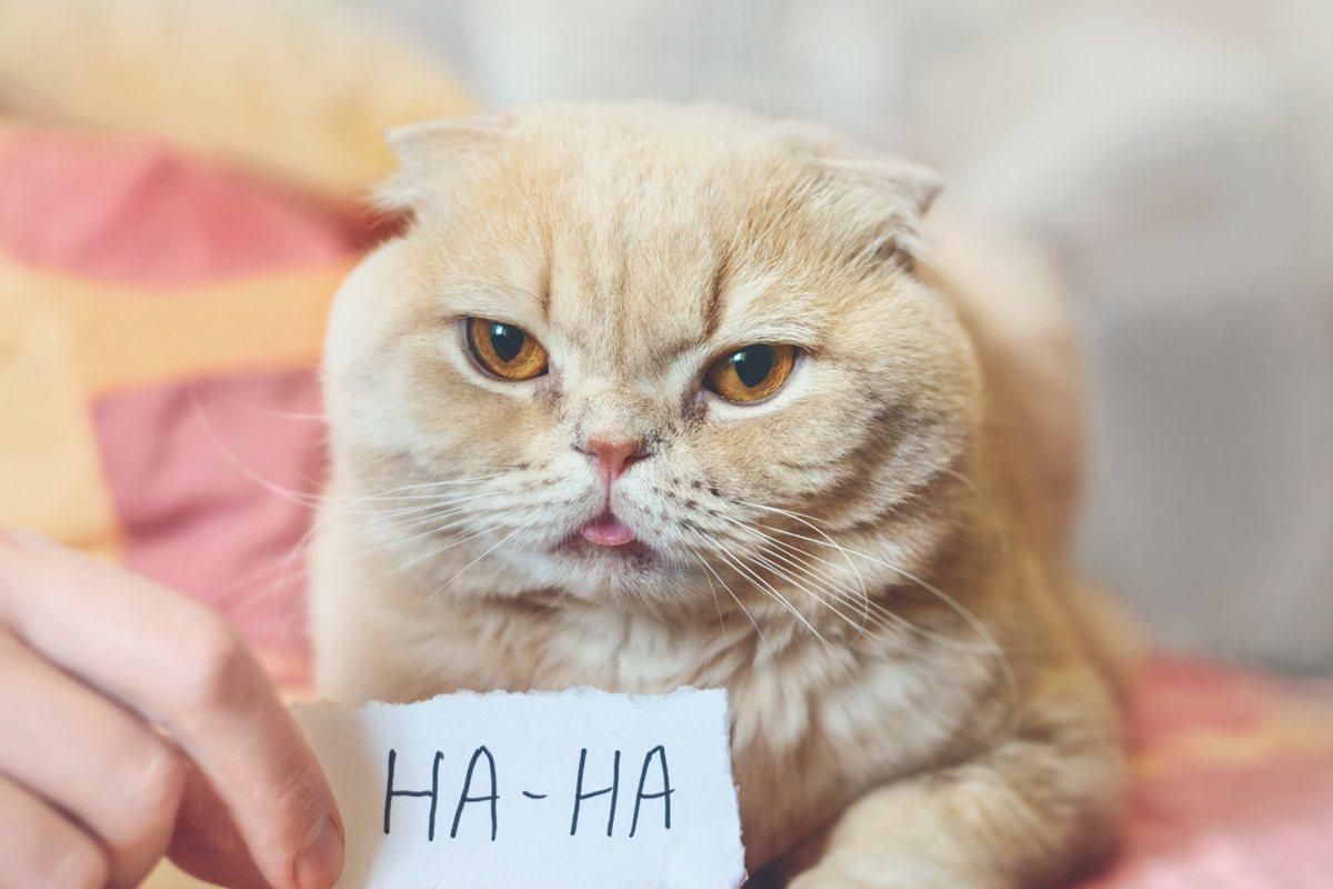最新調查顯示,台灣人的幽默感不足,在全球25個區域中排名15名。示意圖/ingi...