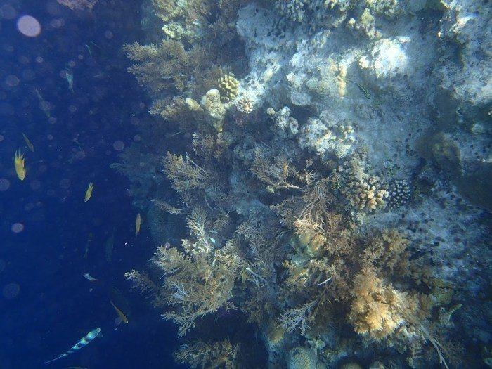 帛琉大斷層。 圖/FunTime