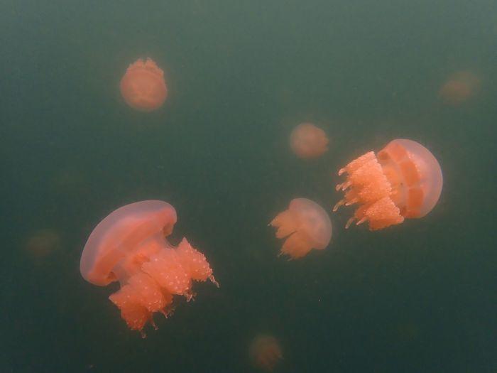 帛琉水母湖。 圖/FunTime