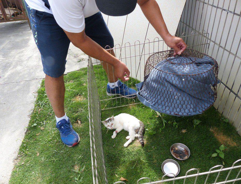 洪祺皓救了一隻因車禍斷腿的貓,還特地為牠做了「個人房」休養。記者凌筠婷/攝影
