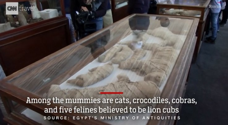 埃及最近出土的木乃伊中有多具動物木乃伊。圖/CNN