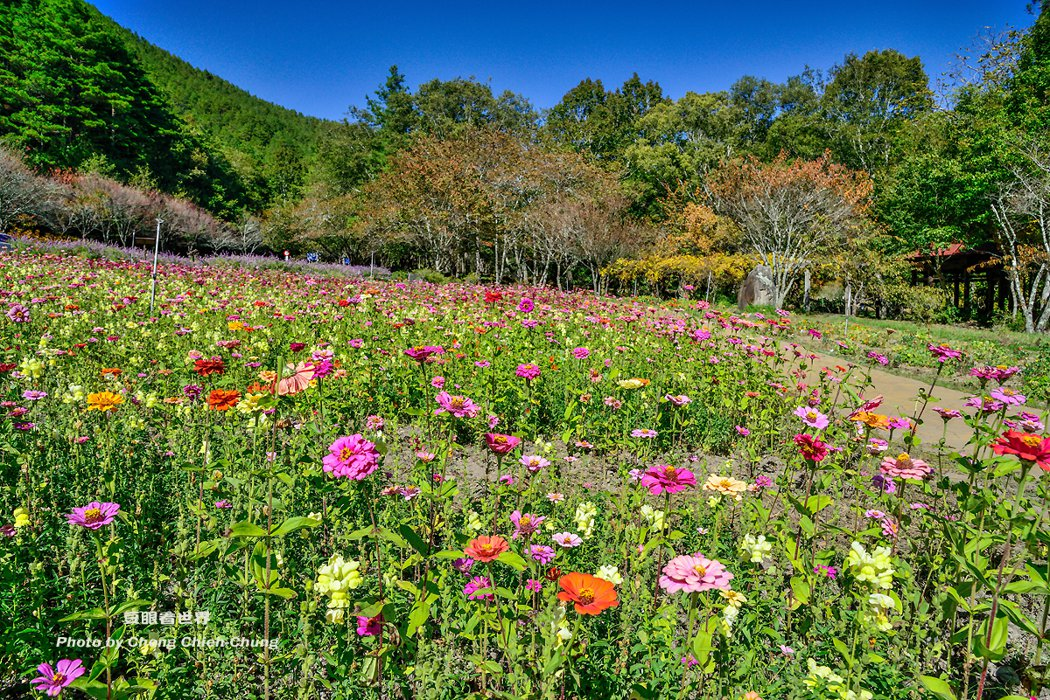 四季皆美的武陵農場