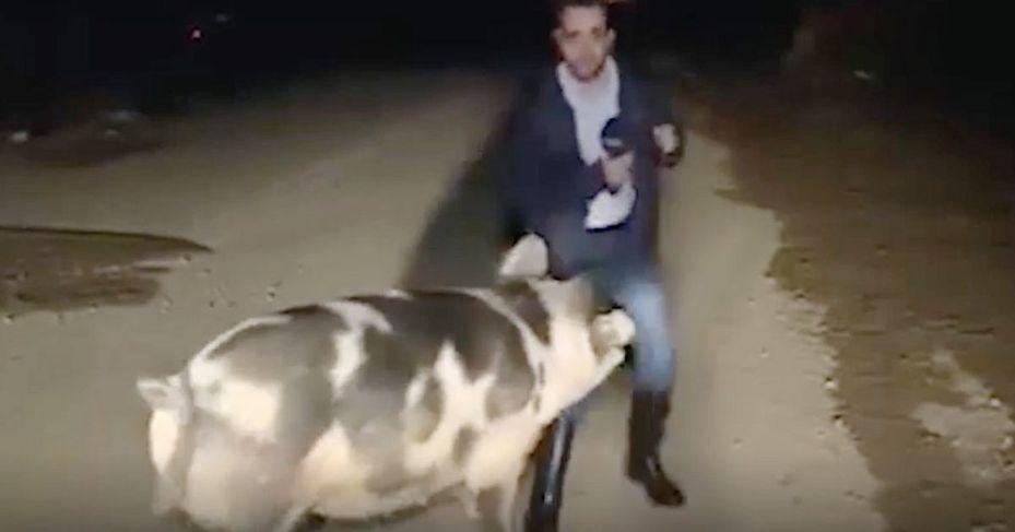 希臘新聞節目「Good Morning Greece」26日前派記者拉佐斯·曼蒂科斯前往災區採訪,結果在連線當下衝出一隻母豬,對記者窮追不捨。路透/ANTENNA TV