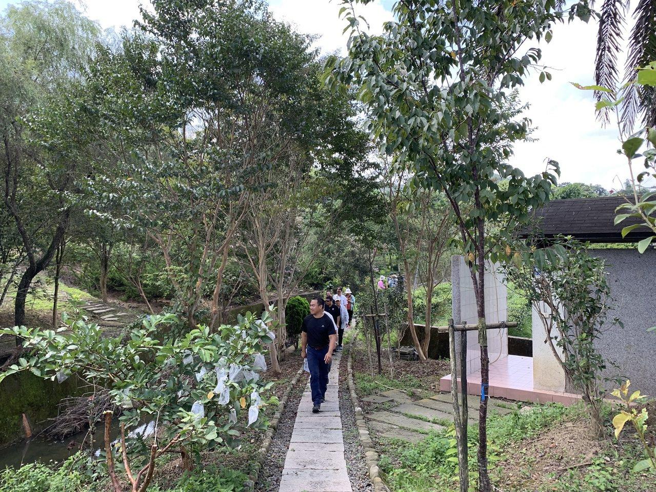 魚池鄉大雁村推動森林步道和蕨類植物生態有成,獲得低碳永續家園銀級認證。圖/南投縣...