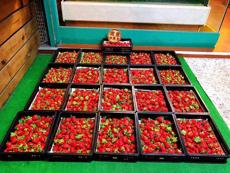 「南泉冰菓室」為保持品質採用契作草莓。圖/南泉冰菓室 提供