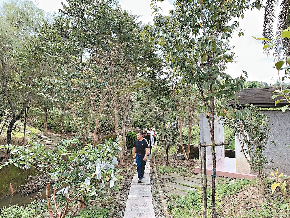 魚池鄉大雁村推動森林步道和蕨類植物生態有成,獲得低碳永續家園銀級認證。 圖/南投...