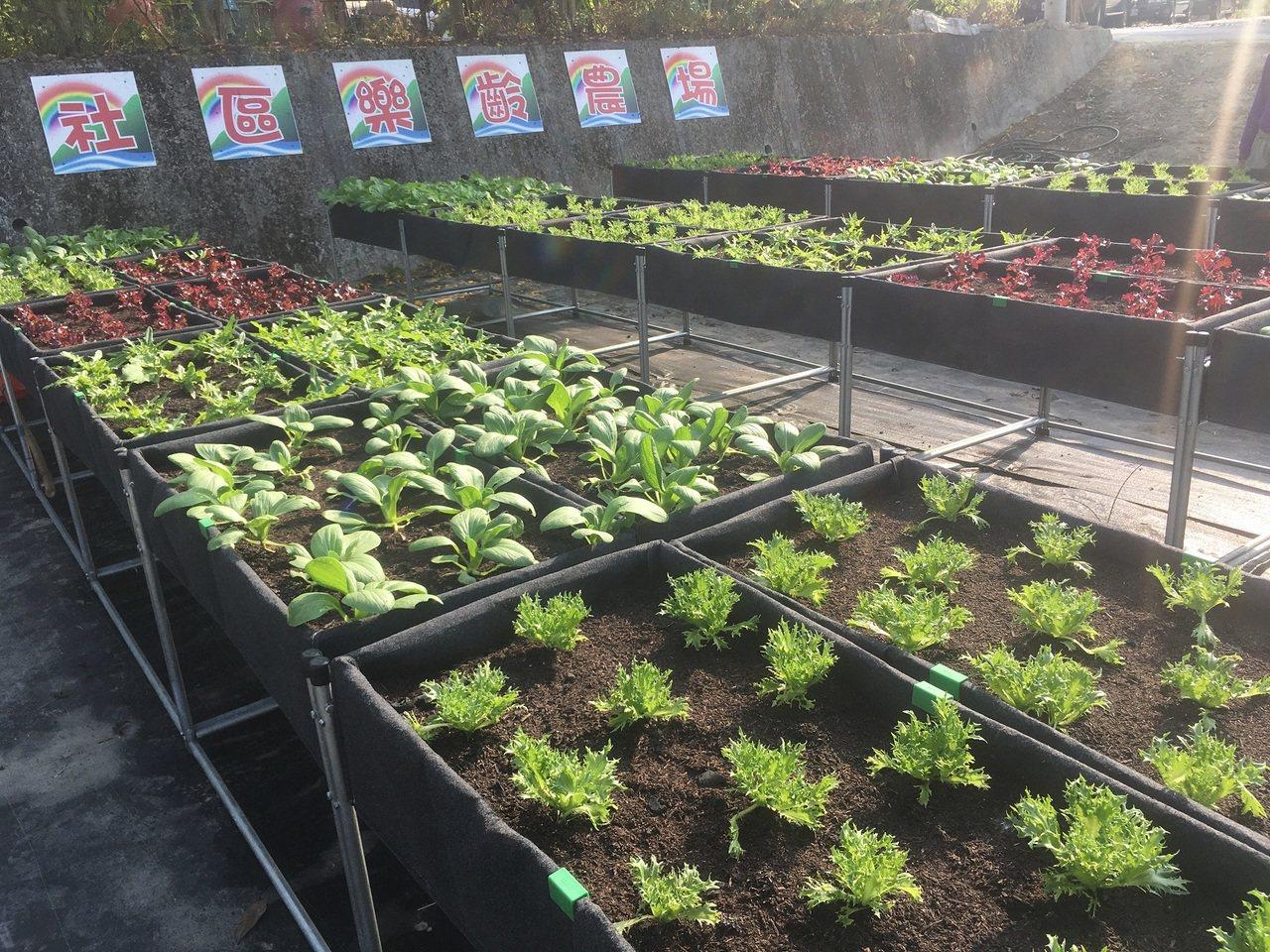 南投縣環保局推動低碳永續家園,鼓勵村里打造社區農園。 圖/南投縣環保局提供