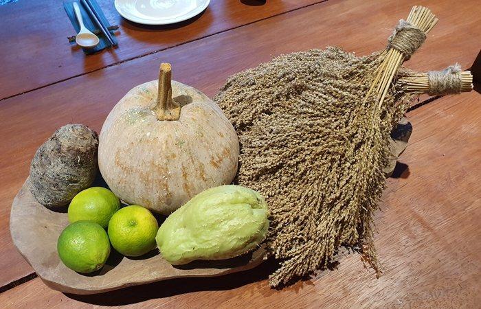 右邊兩簇穀物就是營養成份高於稻米的臺灣油芒。