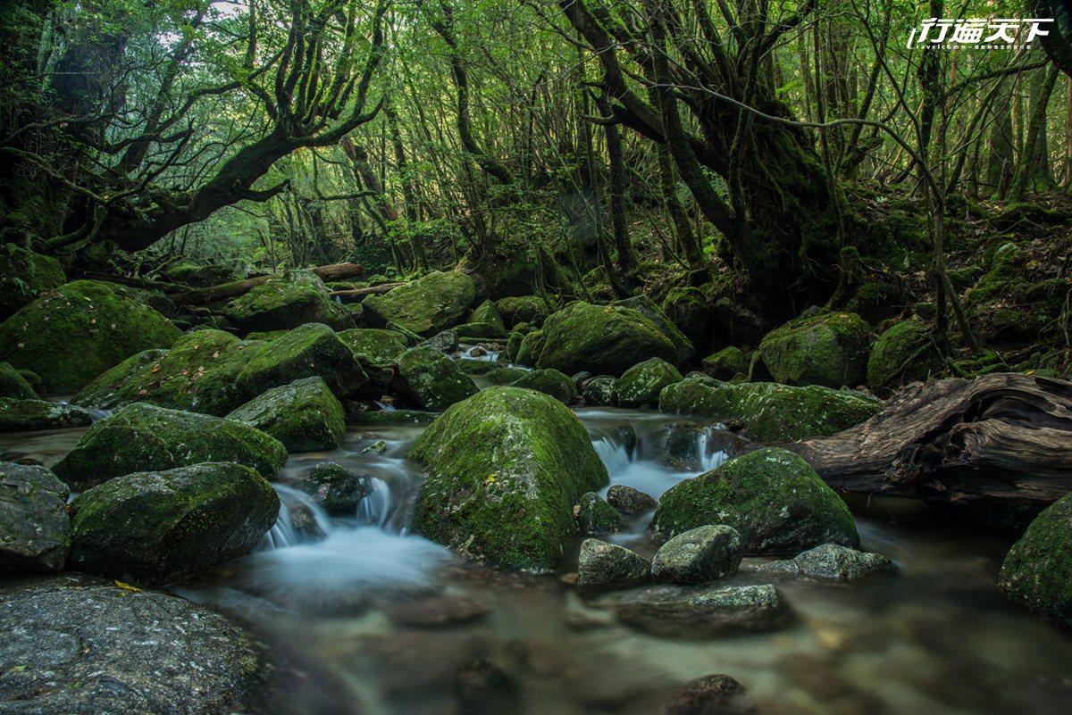 經典的綠意與青苔畫面,是踏上屋久島前就深刻期待的情景。