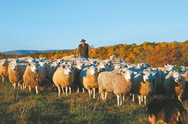美羊自然飼養、產量稀少,甚至在美國也比進口羊肉價格昂貴,卻依然能吸引新一代的消費族群。 圖/美國肉類出口協會提供